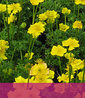 Perennials and Alpines at Carndonagh Nursery and Garden Centre